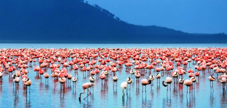 Bogorijos ežeras, Kenija