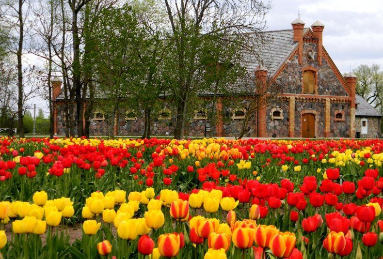 Tulpių žydėjimo šventė Burbiškių dvare