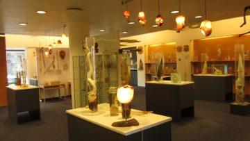 Islandijos falologijos muziejus, Reikjavikas