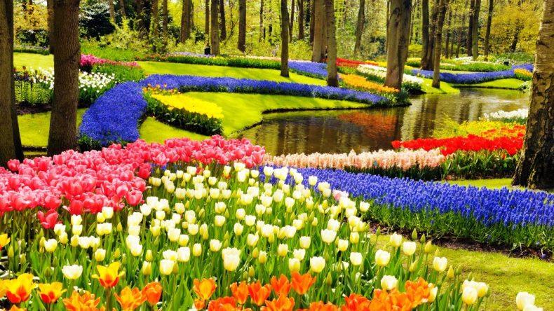 Keukenhofo parkas, Olandija