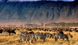 Ngorongoro krateris, Kenija