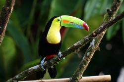 Piedras Blancas nacionalinis parkas, Kosta Rika