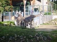Rygos zoologijos sodas