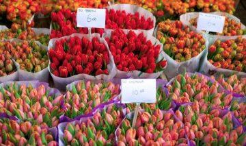 Amsterdamo gėlių turgus