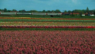 Amsterdamas traukiniu