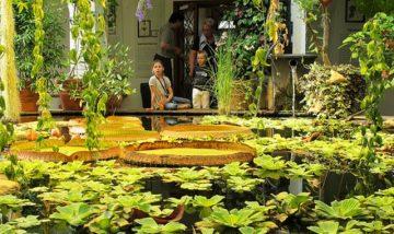 Oslas, Botanikos sodas