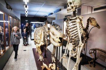 briuselis_zoologijos_muziejus
