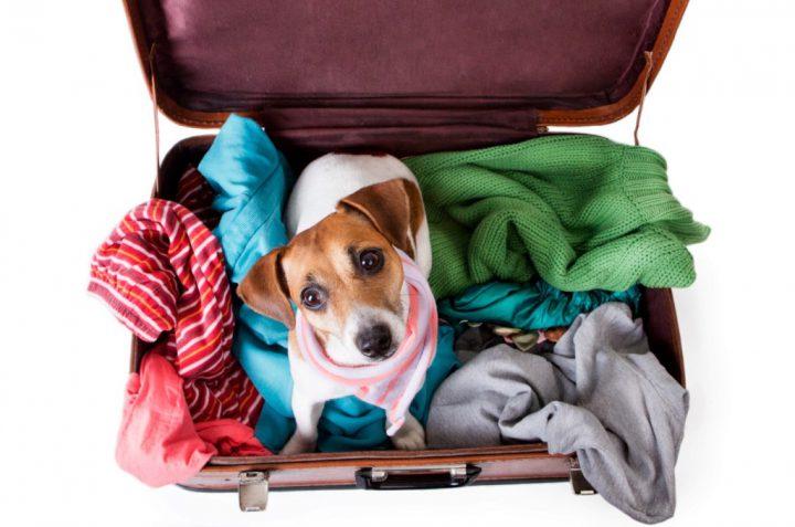 Keliavimas su gyvūnais