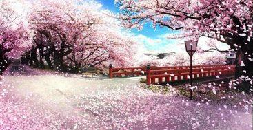 Sakurų žydėjimas Japonijoje