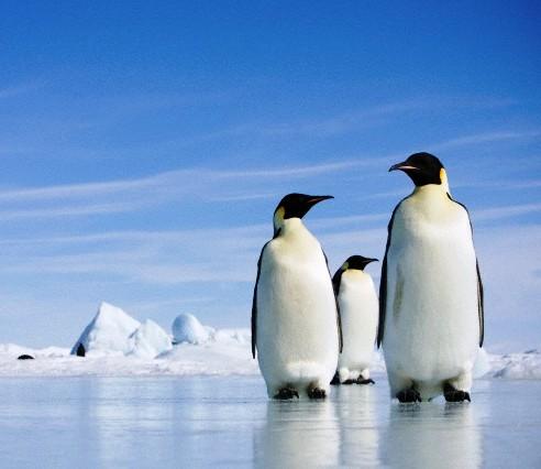 Vieta vestuvėms - Antarktida